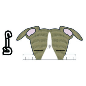 【ウィペット 見てまステッカー】 犬 犬ステッカー 車 窓 玄関 犬種別 名前 カーステッカー グッズ ドッグステッカー 【ウィペット】