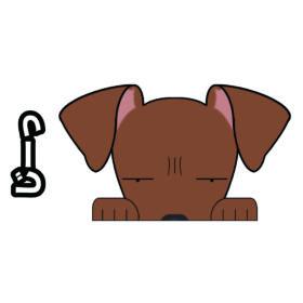 【ミニチュアピンンシャー 見てまステッカー】ミニピン たれ耳 犬 犬ステッカー 車 窓 玄関 犬種別 名前 カーステッカー グッズ ドッグステッカー 【ミニチュアピンシャー】